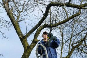 Wie sollen die Preise von Baumfällung in Superhause berechnen?
