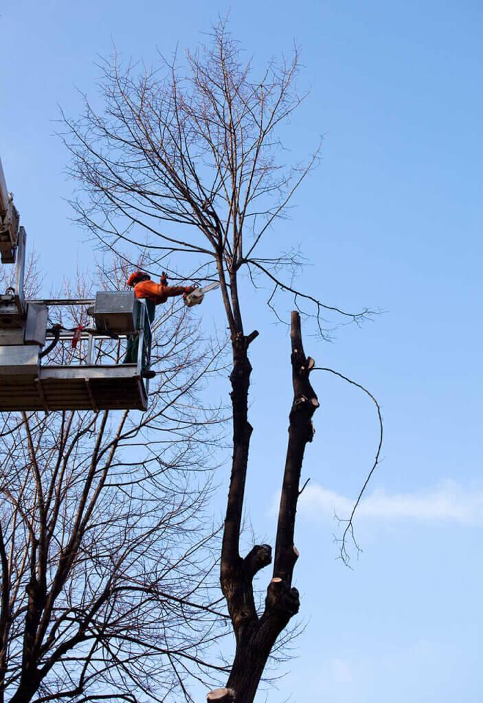 fällen von bäumen Гамбург