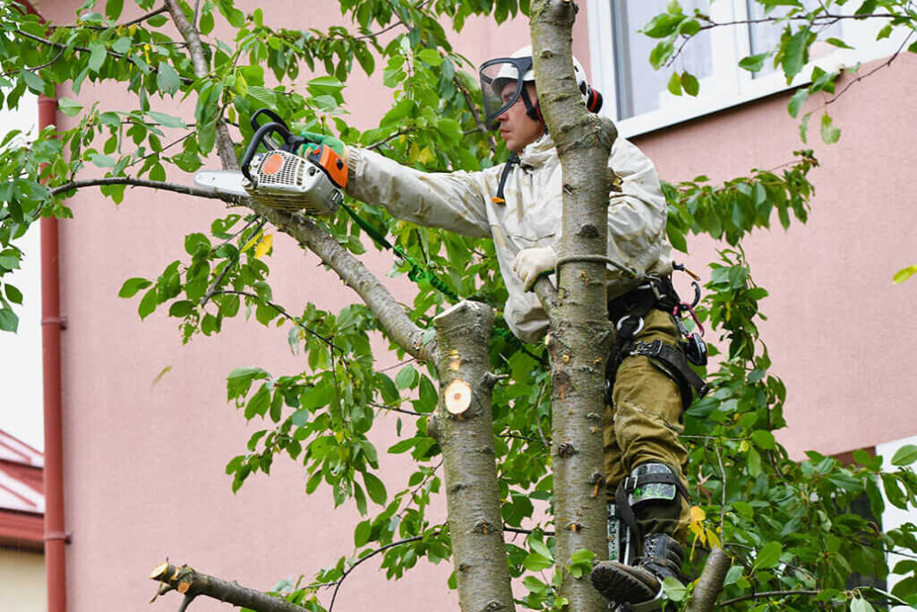 bäume fällen Hockenheim